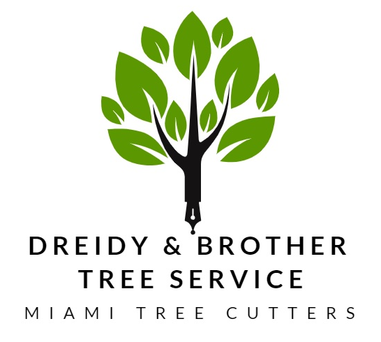 Insured Tree & Palm Service Specialist in Miami-Dade